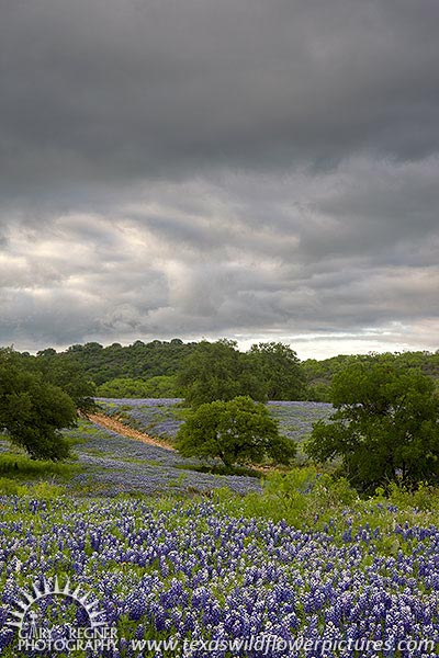 Spring Storm - Texas Wildflowers, Bluebonnets and Storm by Gary Regner