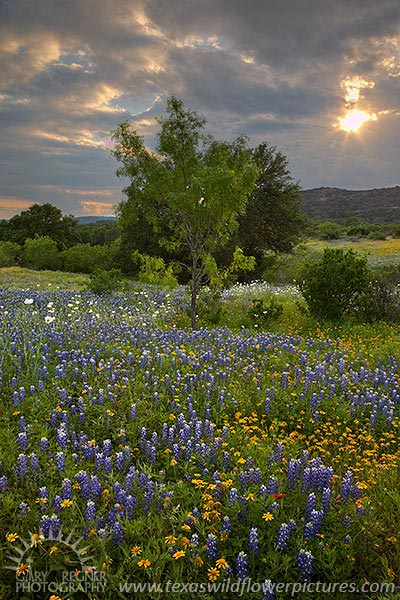 Breaking Through - Texas Wildflowers by Gary Regner