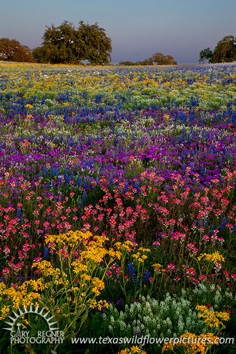Prismatic Meadow - Texas Wildflowers by Gary Regner