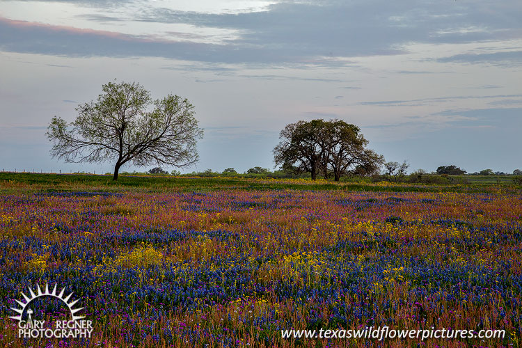 Sutherland Springs - Texas Wildflowers Landscape by Gary Regner