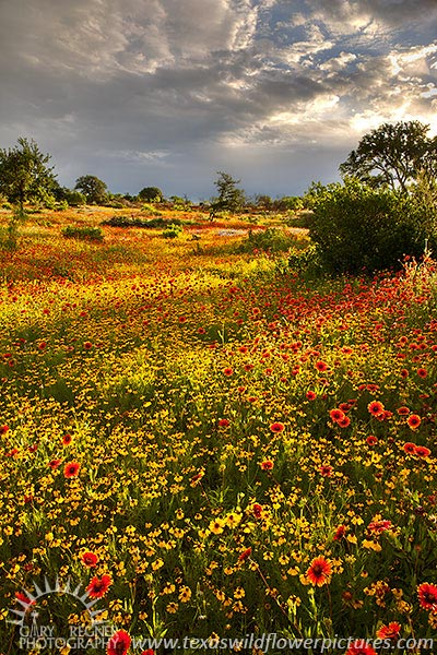 A Break in the Clouds II - Texas Wildflowers at Sunrise by Gary Regner
