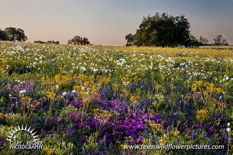 Spring Bounty - Texas Wildflowers, Bluebonnets and Phlox by Gary Regner