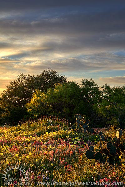 First Light II - Texas Wildflowers Sunrise by Gary Regner