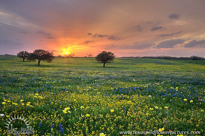 Spring Medley - Texas Wildflowers by Gary Regner