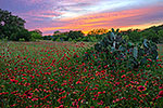 Texas Wildflowers Gallery - Spring 2013